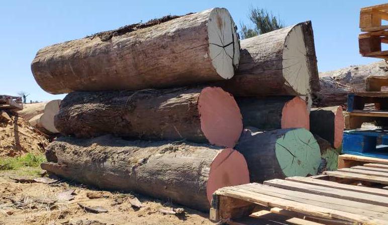 Point Reyes Building Supply - Wood Slabs